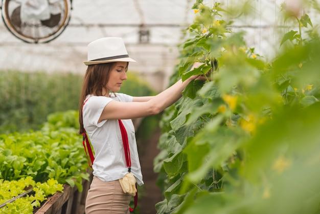 温室の植物の世話をする女性 無料写真