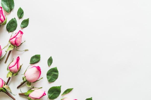 花と葉の上から見る 無料写真