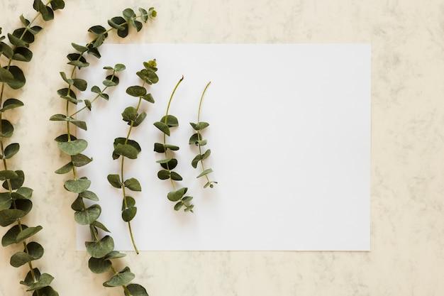 フラットの葉を持つ紙カードテンプレートのレイアウト 無料写真