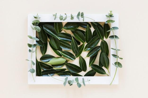 葉の装飾を持つフレームのフラットレイアウト 無料写真