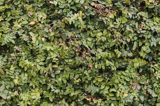 カラフルな生垣の葉の質感 無料写真