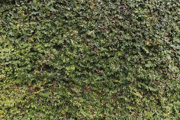 緑豊かな明るい緑の生垣 無料写真