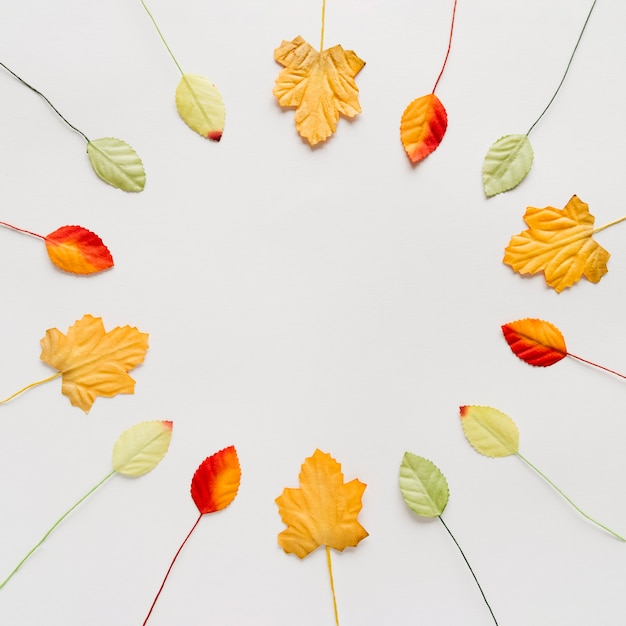 白い表面上の円の異なる装飾的な葉 無料写真