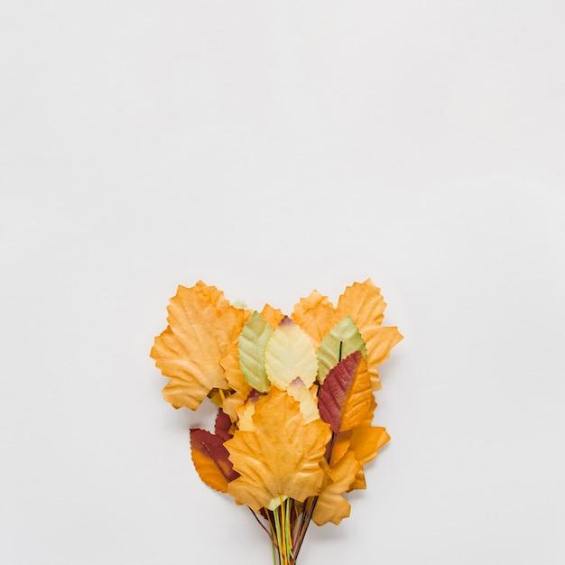 Букет из осенних листьев на белом фоне Бесплатные Фотографии