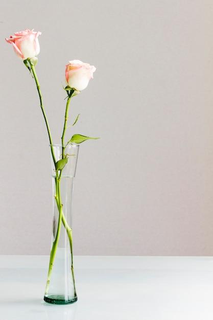 ガラス花瓶のバラ 無料写真