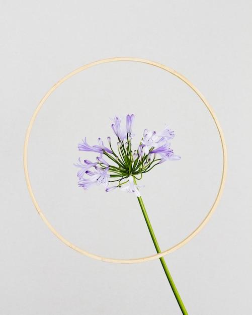 ゴールデンフレームと紫の花 無料写真