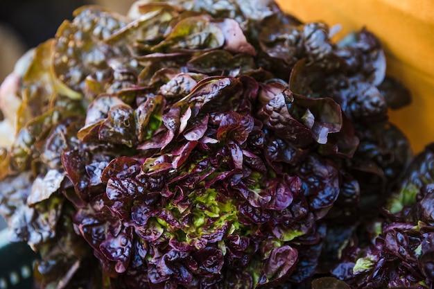 生鮮市場で生の新鮮なロメインレタス 無料写真