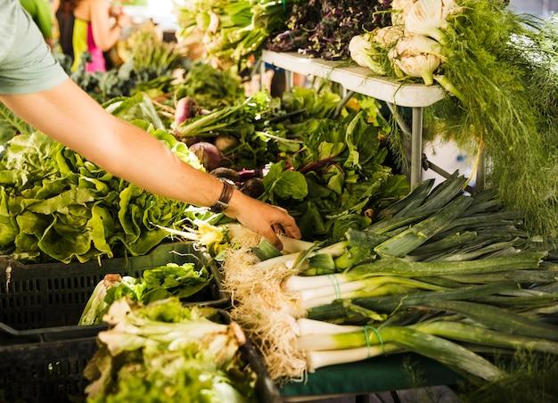 市場の屋台で緑の新鮮な野菜を選ぶ男性の消費者の手 無料写真