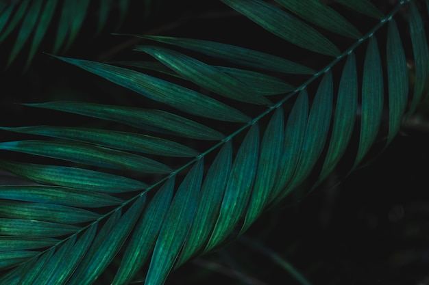 緑の葉の詳細 無料写真