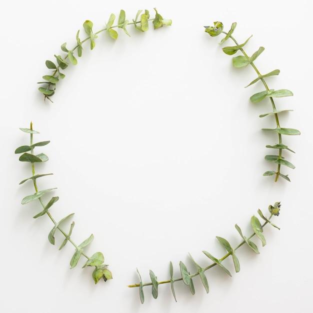 ユーカリの葉 無料写真