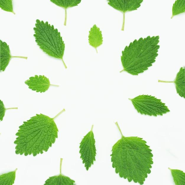 白い背景の上のグリーンバームミントの配置 無料写真
