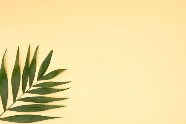 黄色の背景に葉の緑のヤシのクローズアップ 無料写真