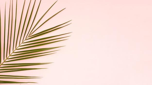 ピンクのコピースペースの背景を持つヤシの木の緑の葉 無料写真