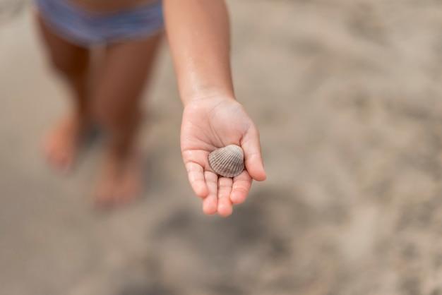 貝殻を示す子供の手のクローズアップ 無料写真