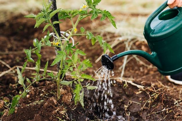 植物の水やりの正面図 無料写真