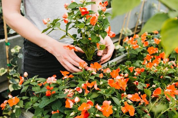 植物の世話をする人を閉じる 無料写真