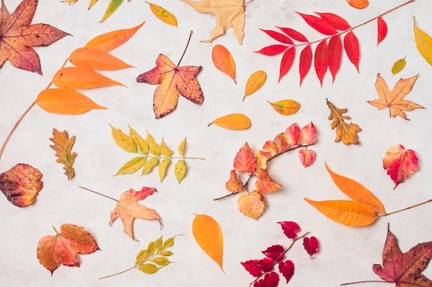 秋の様々な葉のトップビュー 無料写真