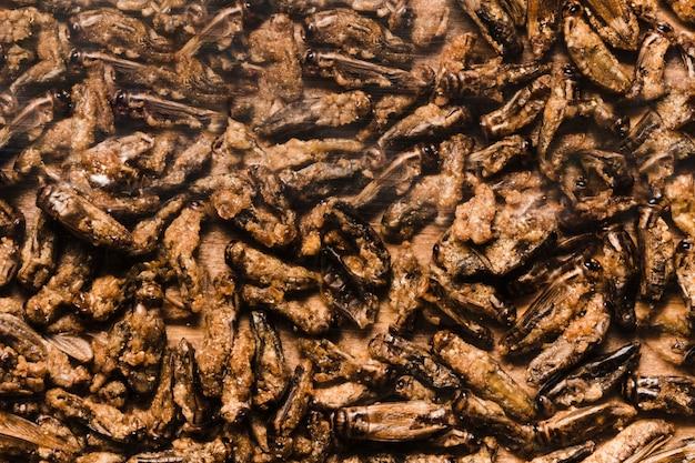 アジア食品食用幼虫の揚げ物 無料写真