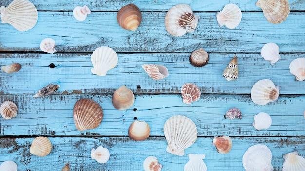 木の板に平干し貝殻 無料写真