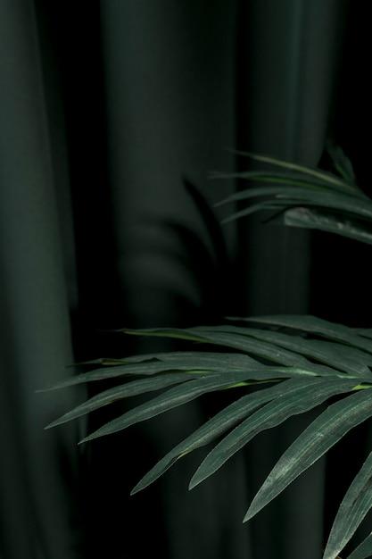 横にヤシの木の葉 無料写真