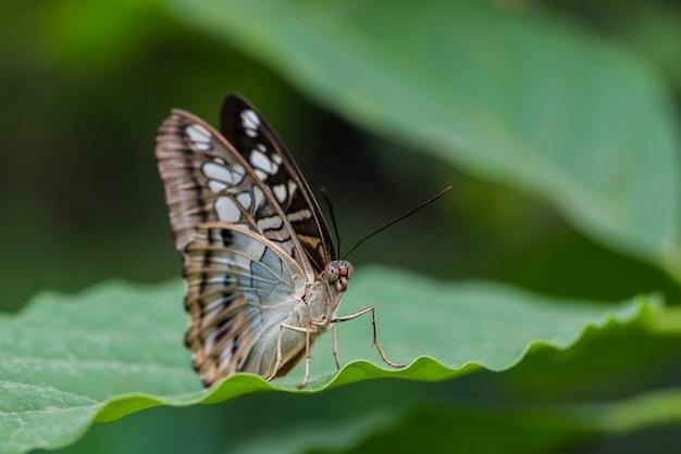 葉の上の美しい蝶を閉じる 無料写真