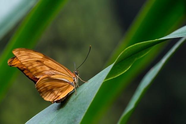横に繊細なオレンジ色の蝶 無料写真