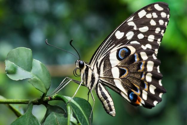 Вид сбоку бабочка конского каштана на растение Бесплатные Фотографии