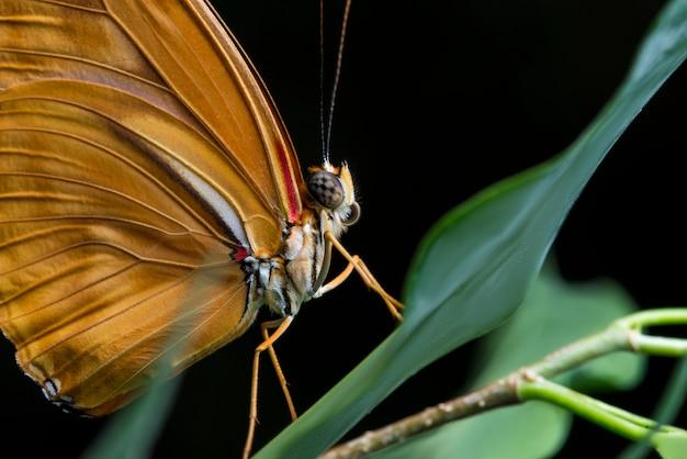 黒の背景とジュリア蝶を閉じる 無料写真