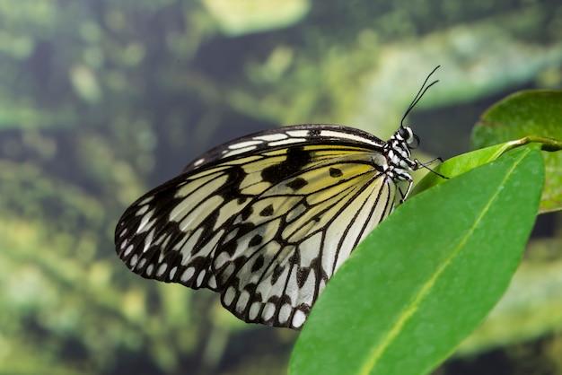 自然の中で側面図蝶 無料写真