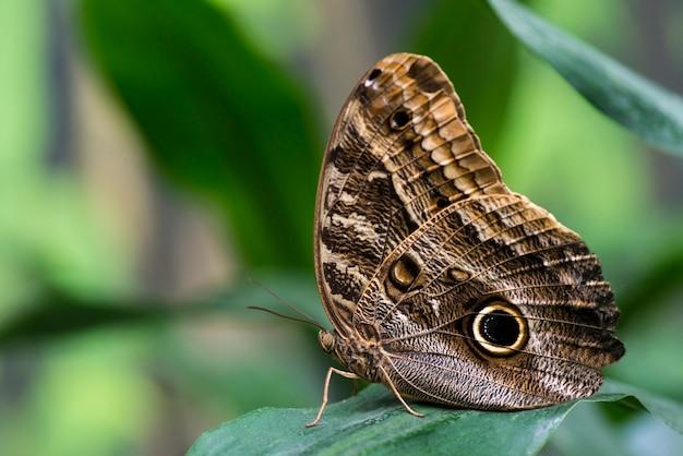 ぼやけて背景を持つフクロウ蝶 無料写真