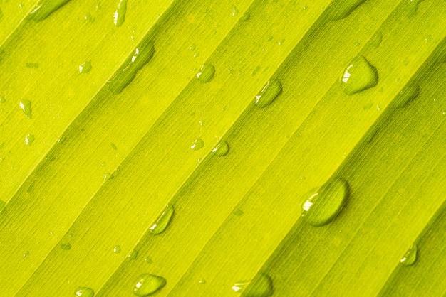 緑のバナナの葉のクローズアップ 無料写真