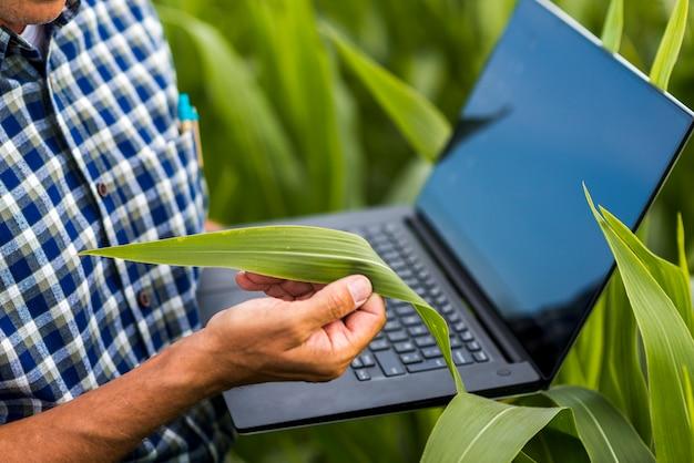 トウモロコシの葉を持って男を閉じる 無料写真