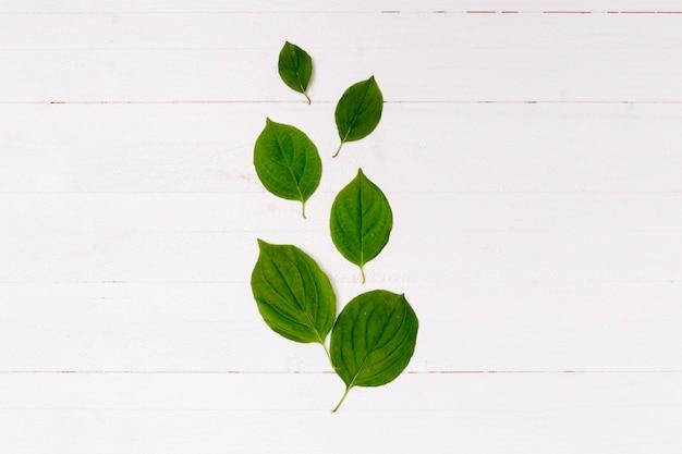 木製の背景上の葉の配置 無料写真