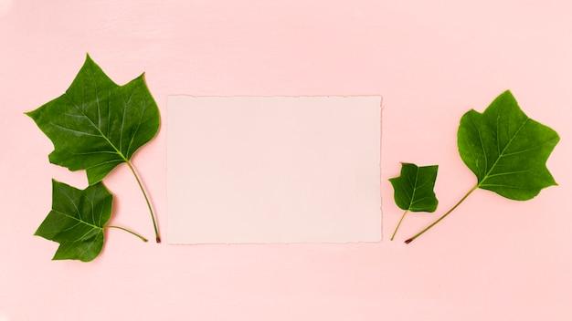 ピンクのコピースペースフラットと緑の葉 無料写真