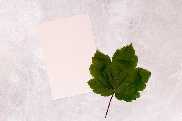 空白のホワイトペーパーとカエデの葉 無料写真