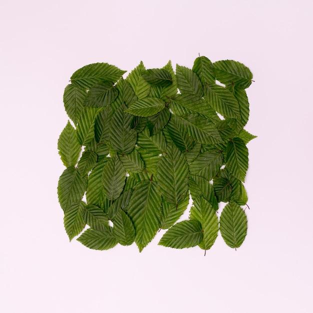 植物キューブの葉と白い背景 無料写真