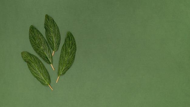 コピースペース緑の背景の葉 無料写真