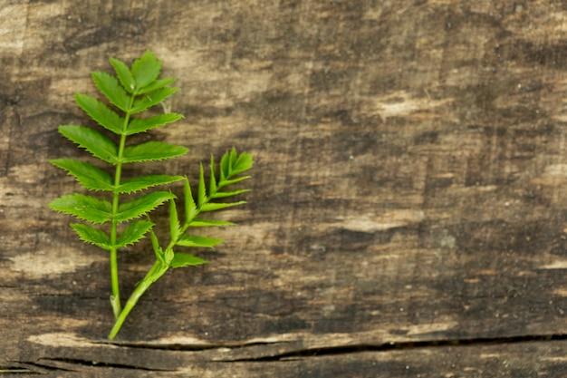 木製の背景にコピースペースを持つシダの葉 無料写真