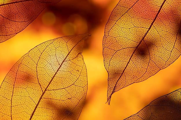 鮮やかな抽象的なオレンジ色の紅葉 無料写真