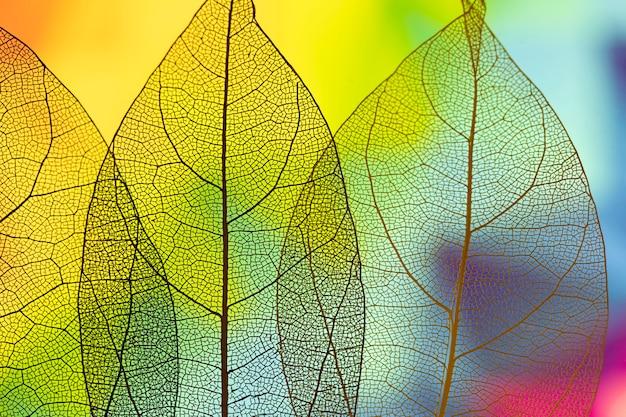 鮮やかな抽象的な緑の紅葉 無料写真