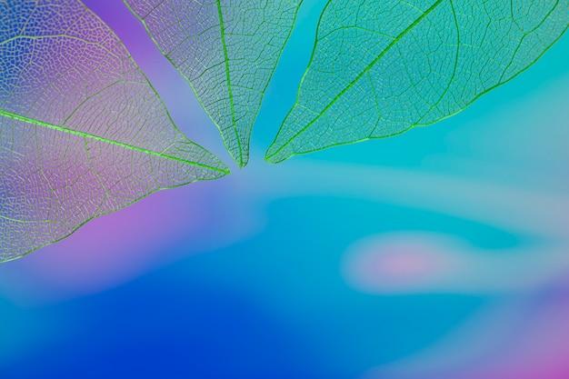コピースペースと青いカラフルな葉 無料写真