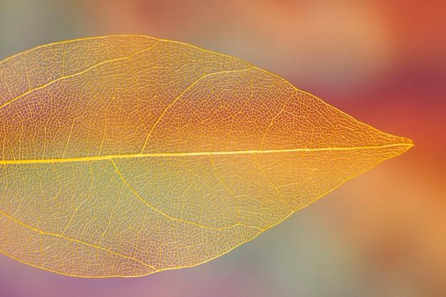 鮮やかな透明なオレンジ色の秋の葉 無料写真