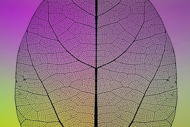 カラフルな秋の葉のクローズアップ 無料写真