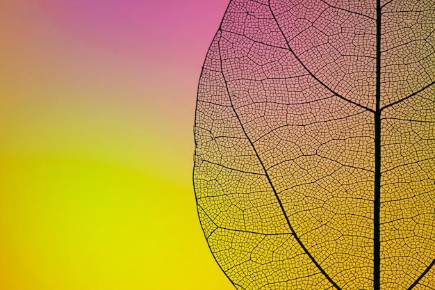 コピースペースで黄色の秋の葉 無料写真