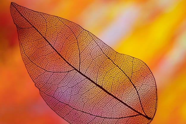 Яркий осенний лист оранжевого цвета Бесплатные Фотографии