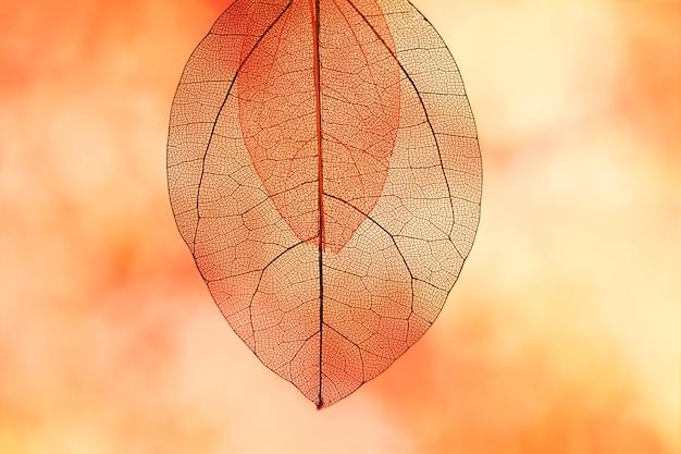 鮮やかなオレンジ色の紅葉 無料写真