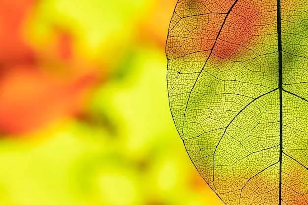 抽象的な透明な秋の葉 無料写真