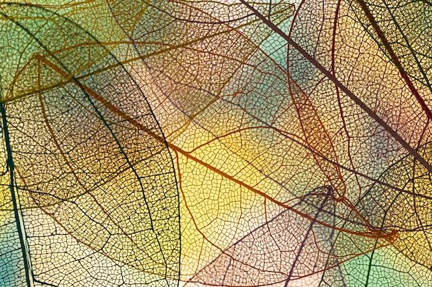 Абстрактные цветные осенние листья Бесплатные Фотографии