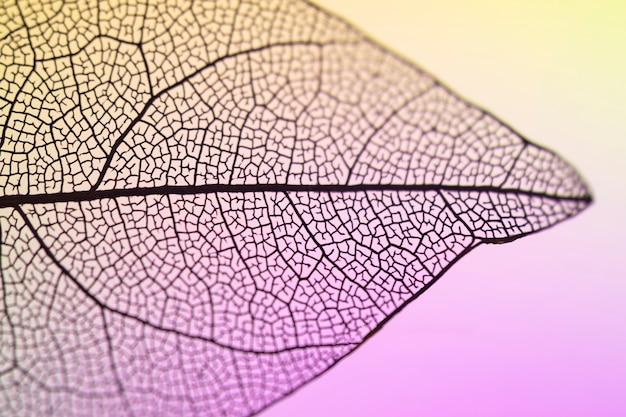 美しい鮮やかな透明な秋の葉 無料写真