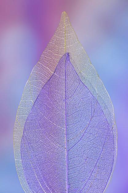 抽象的な鮮やかな色の秋の葉 無料写真